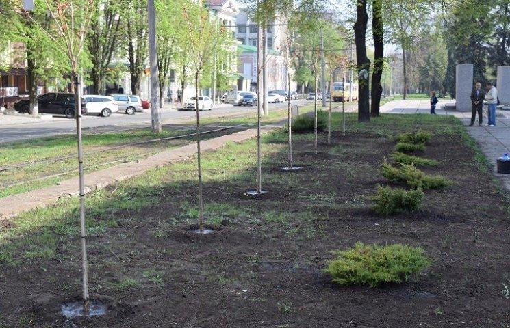 У центрі Дніпропетровська висадили алею японських сакур
