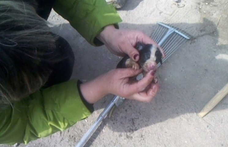 На Вінниччині рятувальники діставали з-під кіоску новонароджених цуценят