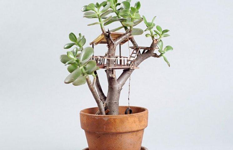 Як виглядають мініатюрні будиночки на кімнатних рослинах