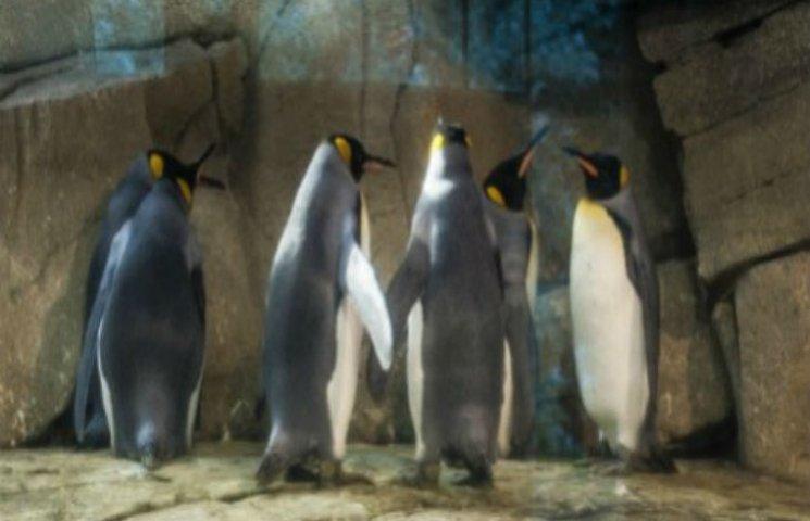 Пінгвіни-геї знайшли новий будинок в Німеччині