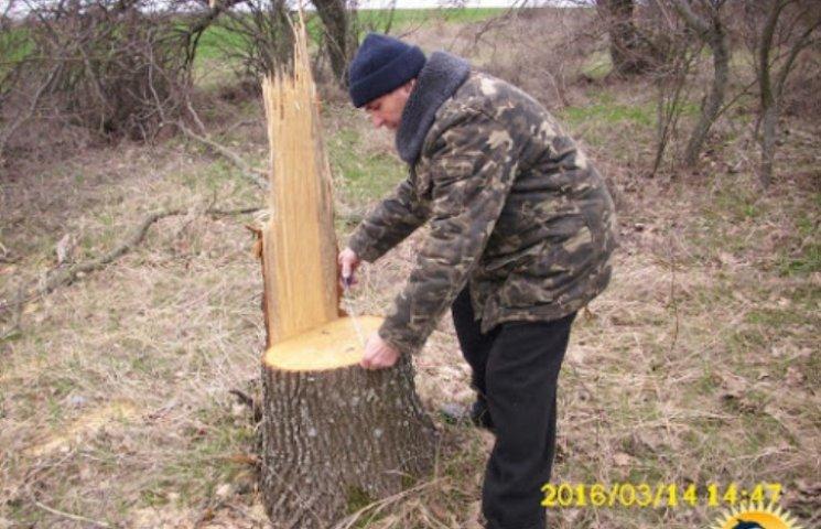 На Миколаївщині браконьєри масово знищують лісосмуги