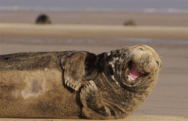 ТОП-6 тварин з чарівною посмішкою