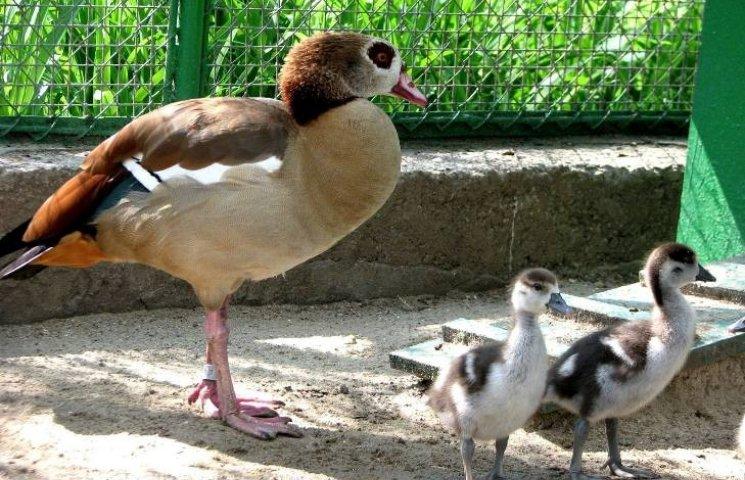 У Миколаївському зоопарку набирає обертів бебі-бум