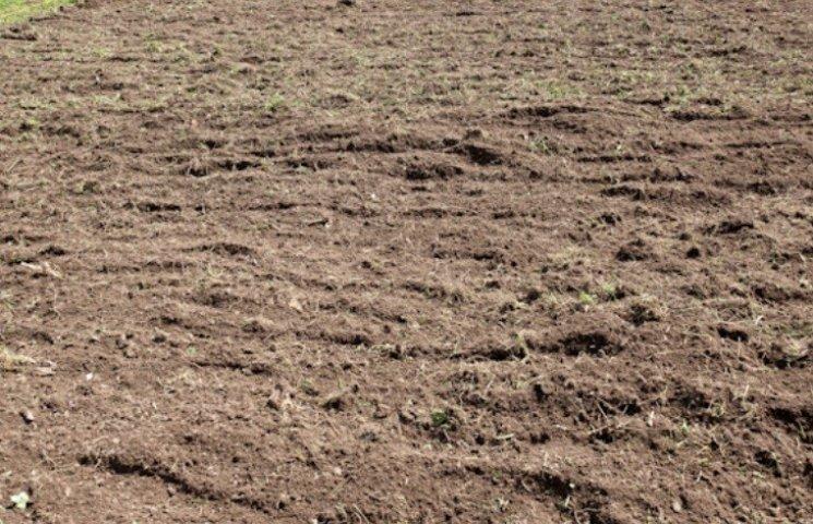 На Миколаївщині Держгеокадастр незаконно передав в оренду більше 260 га землі
