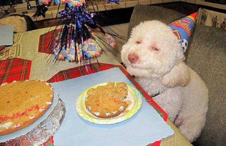 ТОП-13 животных-именинников, которые празднуют день рождения веселее тебя