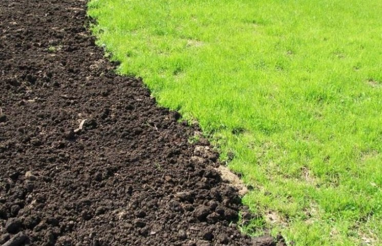 Миколаївщина в лідерах з посіву ранніх зернових культур