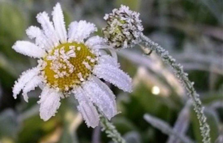 На Миколаїв насуваються заморозки: вночі температура знизиться до - 5°С