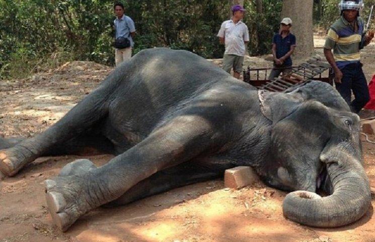 В Камбодже слон упал замертво из-за большого количества туристов