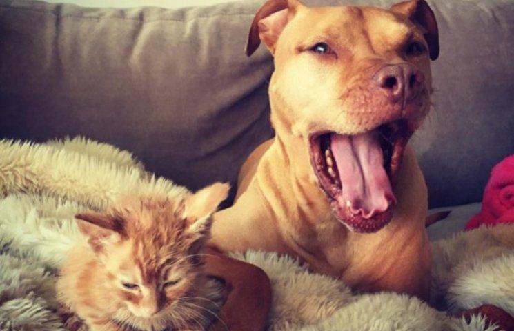 Как рыжий пес удочерил рыжую кошечку