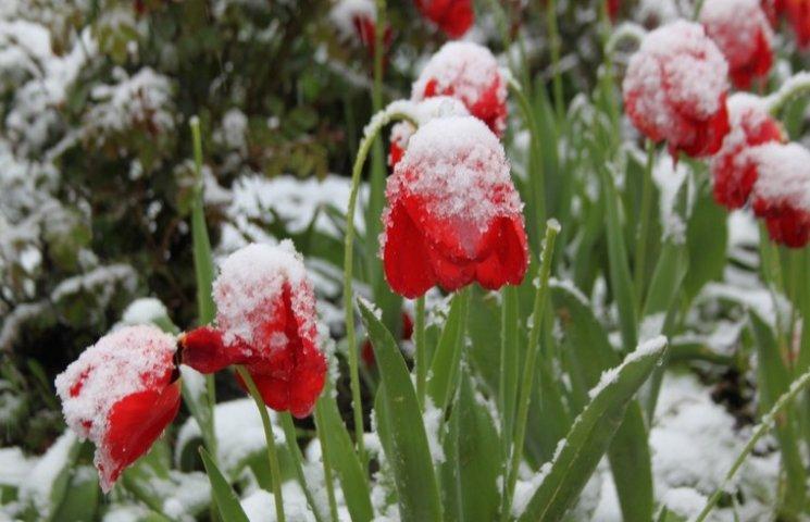 Картинки по запросу засипало снігом