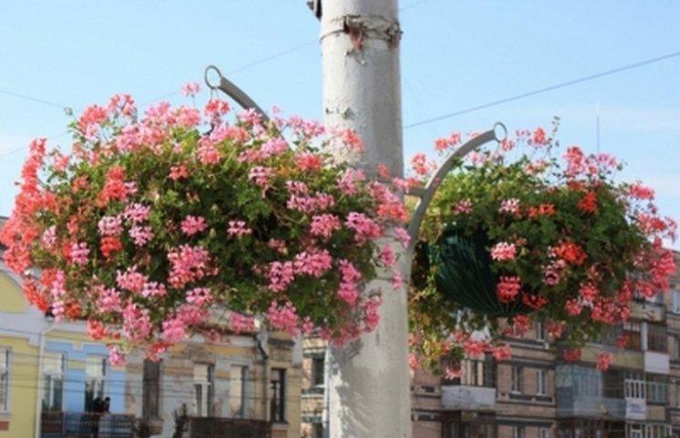 Вулиці Вінниці прикрашатимуть 1800 вазонів