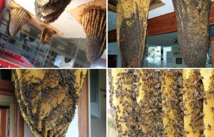 В Испании есть музей живых пчел