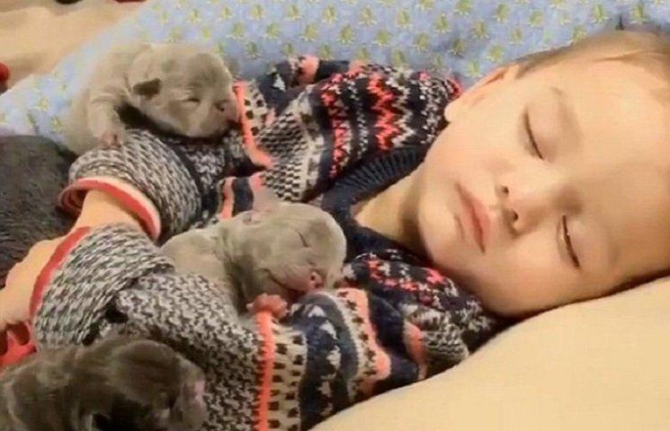Як малюк заснув разом із милими цуценятками