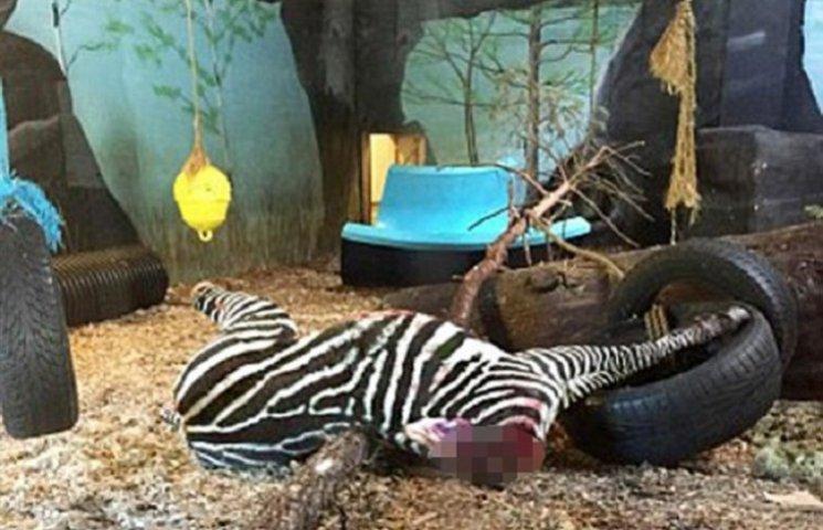У норвезькому зоопарку зебру згодували тиграм на очах у відвідувачів