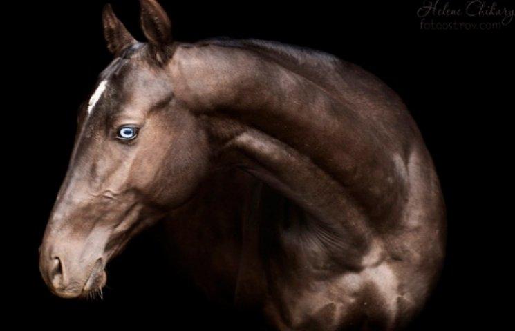 """На Одещині рятують коней від """"бійні"""""""