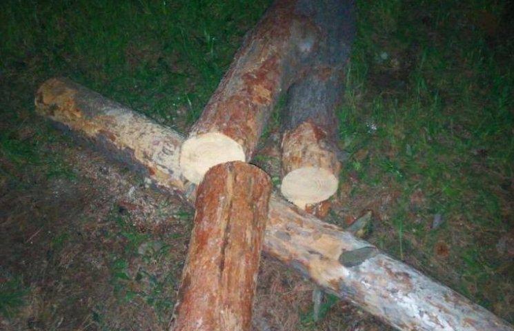 Патрульні впіймали нічних браконьєрів, що рубали дерева в парку