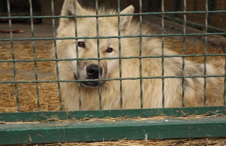 У бердянському зоопарку народилися вовченята і поні