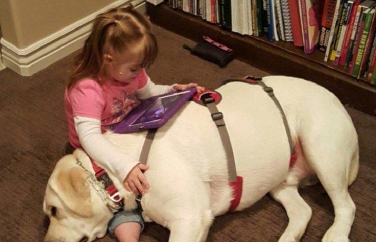 Собака-герой врятував 4-річну дівчинку, відчувши небезпеку за 6 км