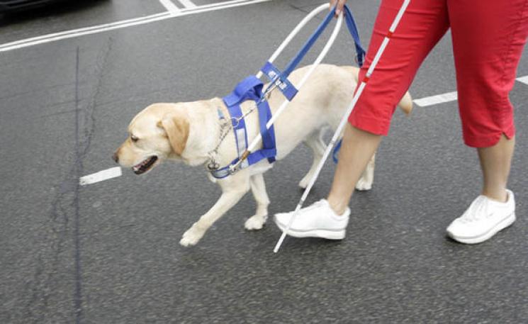 Только для зрячих: Когда собака-поводырь…
