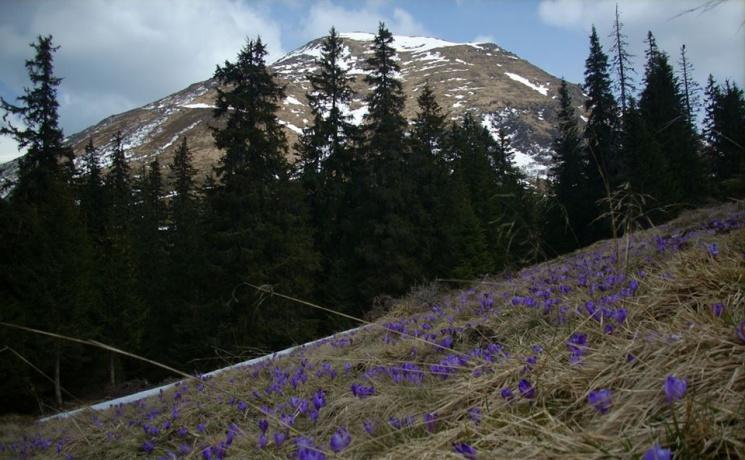 Чому навесні треба їхати на Чорногірський масив у Карпати?