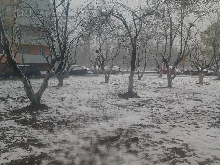 Аномалія посеред весни: Наприкінці квітня Полтаву накрило снігом