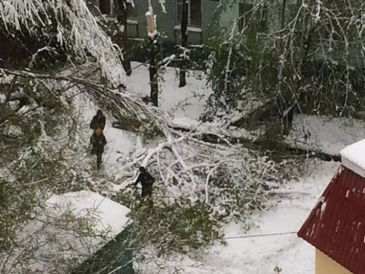"""Результат пошуку зображень за запитом """"дерево впало від снігу"""""""