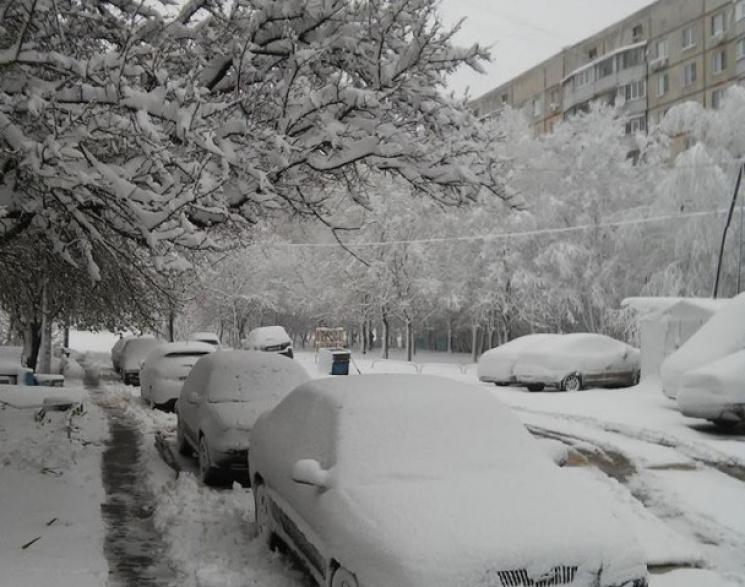 Украина может потерять треть урожая плодовых из-за снегопадов