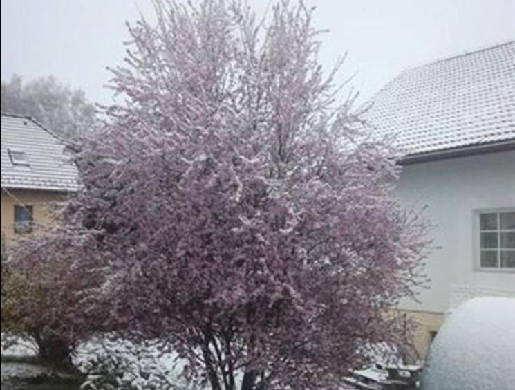 Люблю квітневий сніг: Як закарпатці стібуться з похолодання