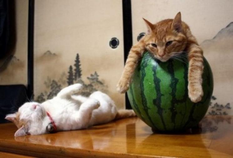 смотреть смешное фото котов