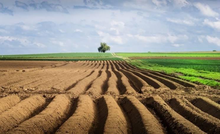 На Миколаївщині аграрії взялись засівати поля ячменем та горохом