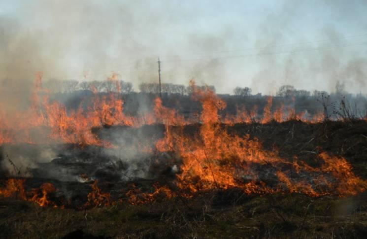 За три дні на Тернопільщині сталося 33 пожежі в екосистемах