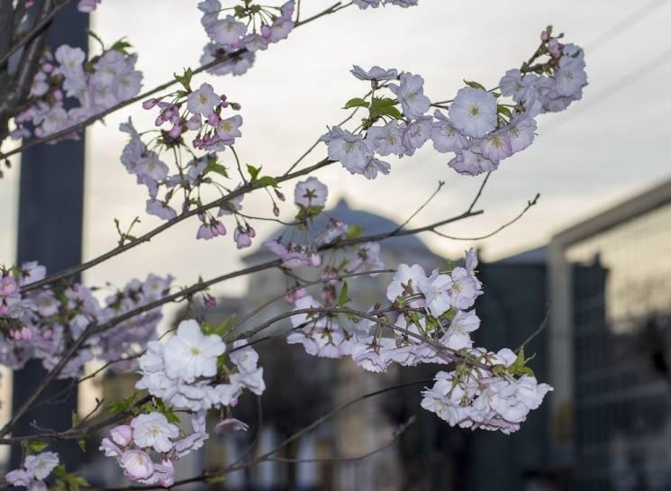 Фотохудожник показав, як яскраво розцвіла Вінниця (ФОТО)