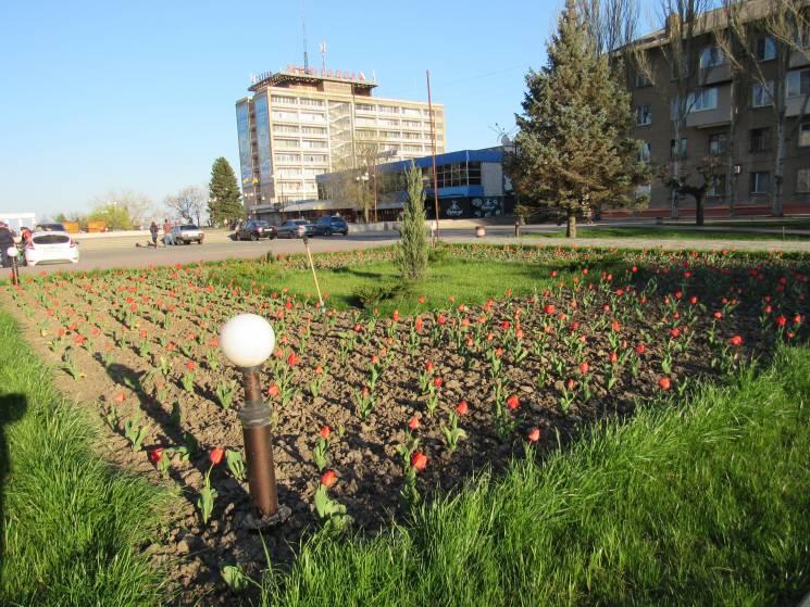 На головній площі Мелітополя розцвіли тюльпани (ФОТО)