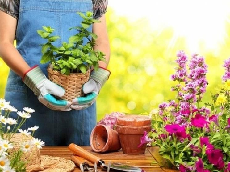 Столичних садівників та городників кличуть на ярмарок