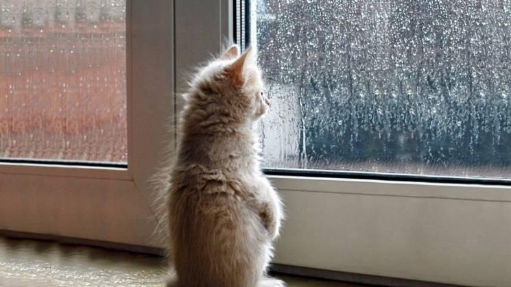 Спека відступає: У Києві стрімко похолодає, посилиться вітер й дощ (КАРТА)