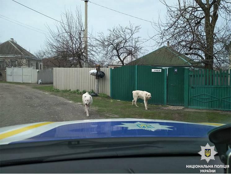 Два алабаї перелякали мешканців столиці Західного Донбасу