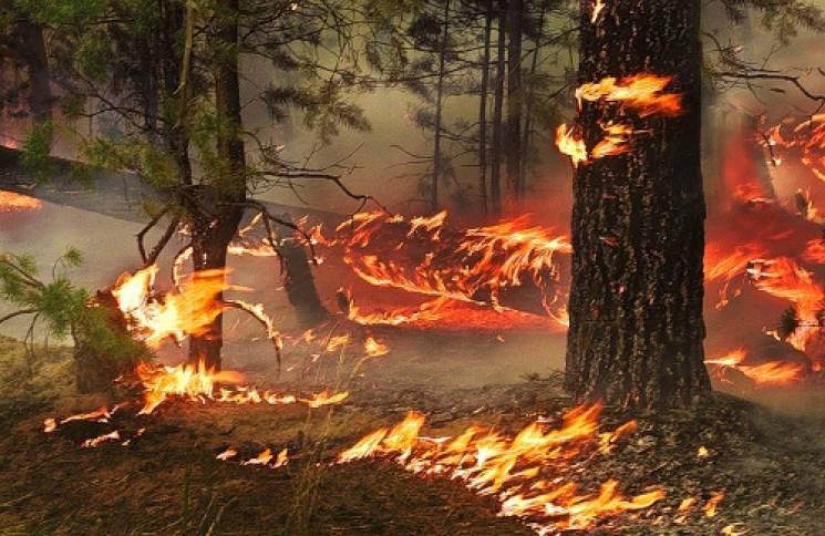 До Львова підступають пожежі