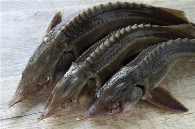 Під Бердянськом зловили браконьєрів з уловом мало не на півмільйона гривень (ВІДЕО)