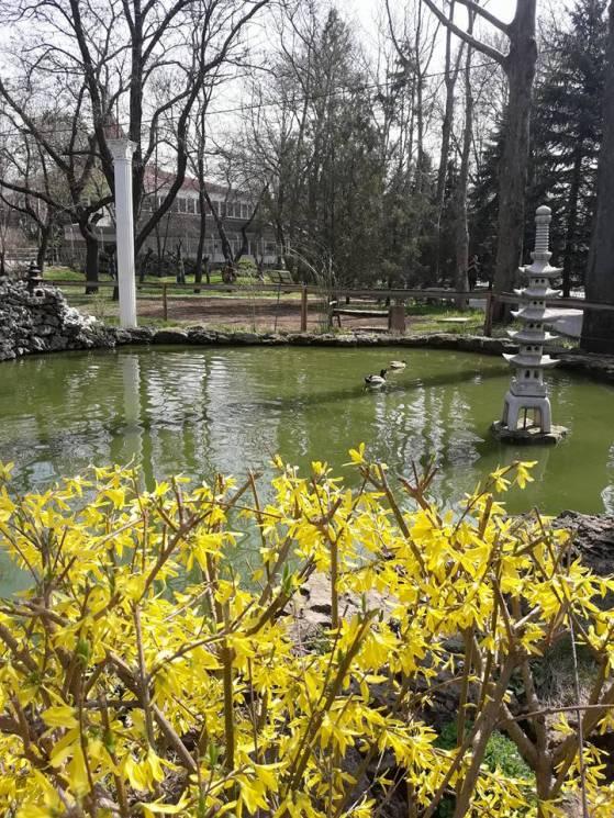 Як у Миколаївському зоопарку квітують магнолії, мигдаль та сакура (ФОТО)