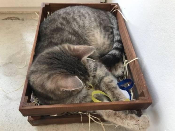 За переміщеннями кота Тигра кабінетами ДніпроОДА стежать за фотографіями (ФОТО)