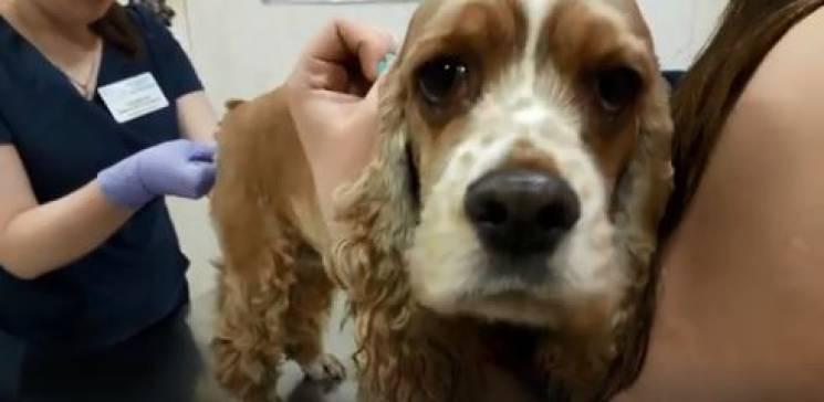 У Дніпрі ветеринари рятували собаку, який з'їв шоколад