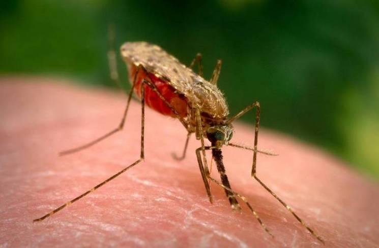 Лікарі знайшли малярію у харків'янина, який повернувся з Африки