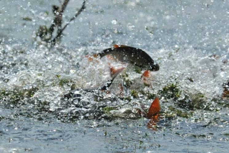 На Вінниччині триває сезон полювання на браконьєрів
