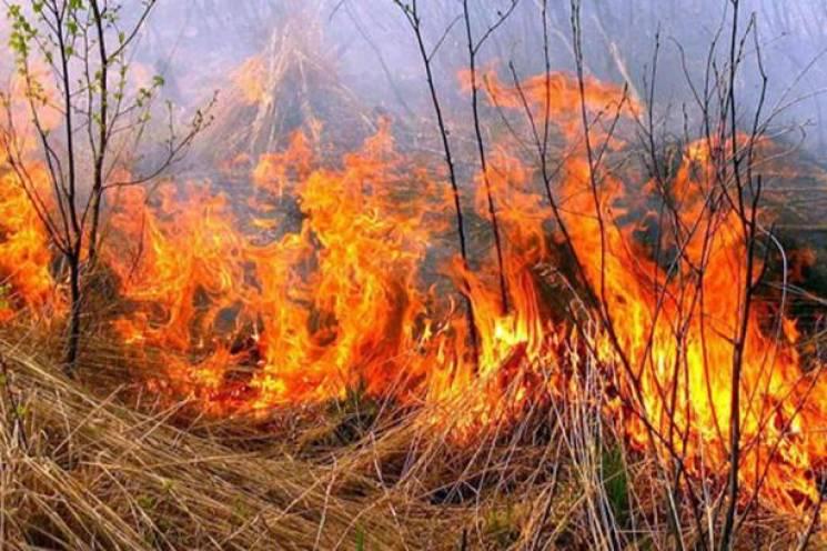 На Вінниччині палали ще чотири гектари поля