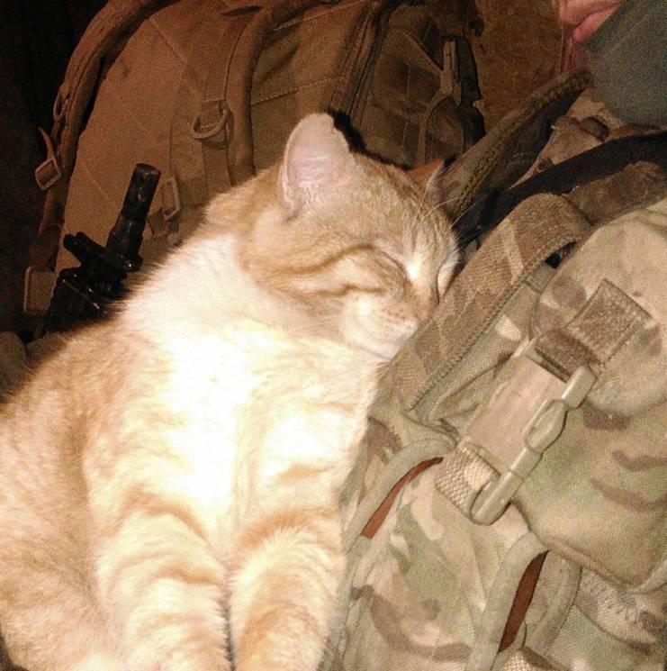 Армійські софізми - 61 (18+)