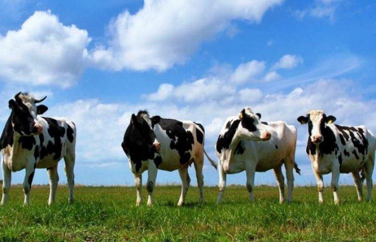Коні і корови довели дунайський біосферний заповідник до межі зникнення