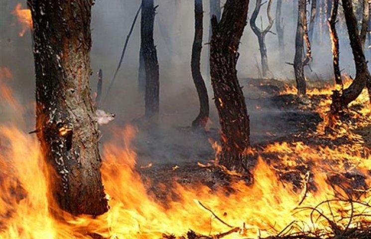 Запорізькі пожежники ліквідували масштабну пожежу в Розумовці