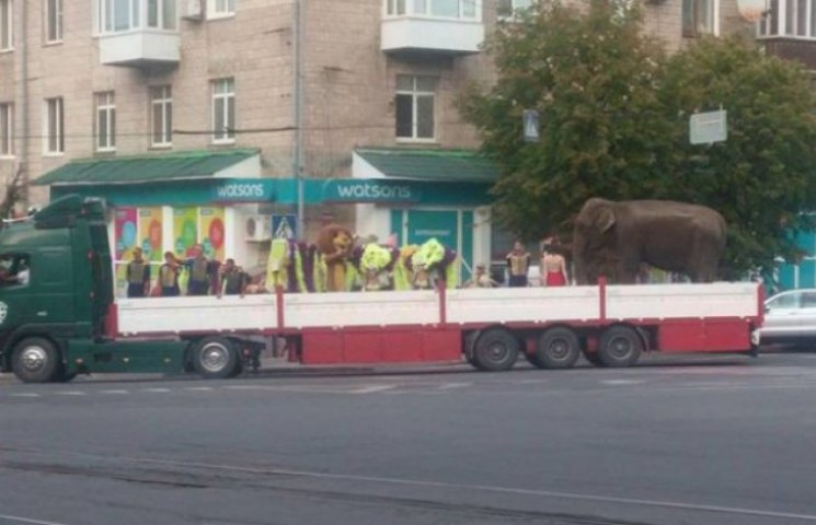 Вінничани жаліють слона, якого у них по вулицях водили