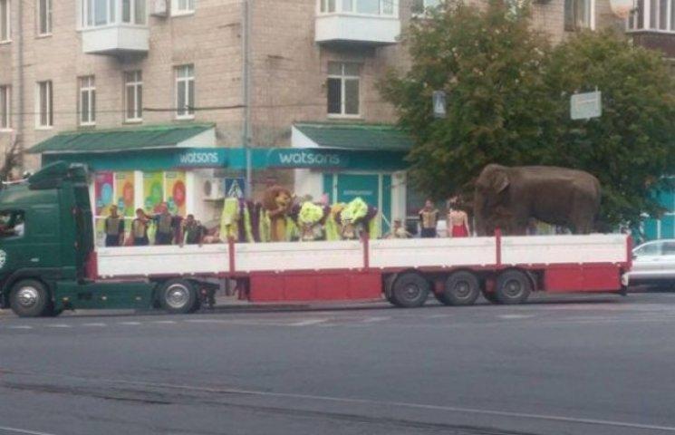 Вінничани вимагають припинити страждання тварин у пересувному угорському цирку