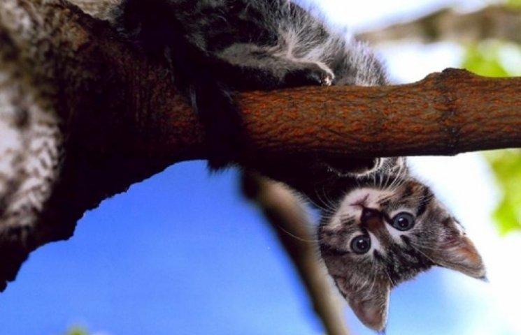 Як МНСники на Одещині рятували кота
